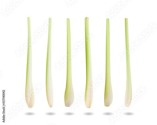 Fototapeta lemongrass. Realistic vector illustration, 3d obraz