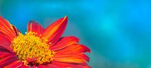 Orange Flower On The Blue Gradient Background