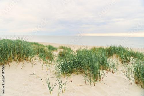 Baltic Sea. Beach in the village of Amber. Beach in Russia with a blue flag. Kaliningrad region. © Dima Anikin