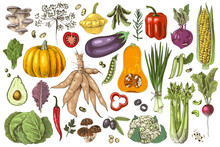 Hand Drawn Set Of Fresh Vegetables And Mushrooms