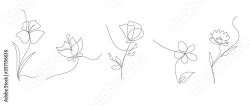 single line art vector flower illustration, outline set of blooming flowers Fotobehang