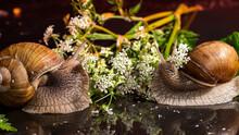 Slippery Snail Eats White Flow...