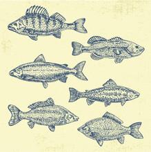 Vintage Sea Illustration. Hand Drawn Sketch Vector Illustration Of Different Fish