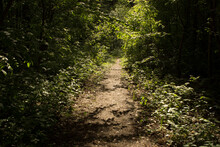 A Narrow Path Or Road Through A Deciduous Summer Green Forest Or Park. A Path In The Sun, Like A Tunnel.