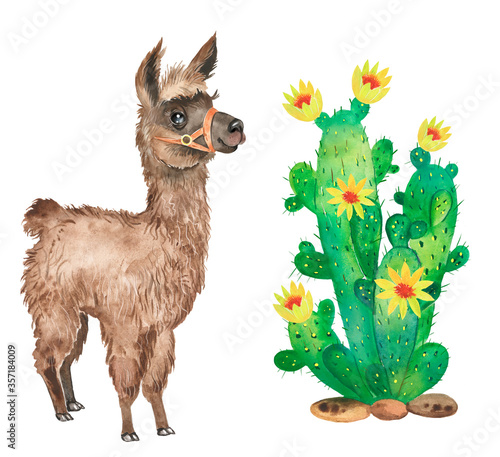 Watercolor set with cute brown llama, cacti, farm animal, flowers Canvas Print