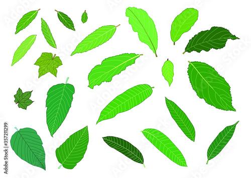 Fototapeta Green Leaves fresh abstract isolated on white background illustration vector
