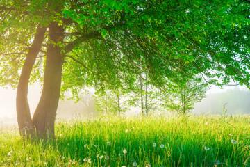 Panel Szklany Drzewa Spring landscape