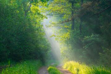 Fototapeta Współczesny Summer forest