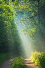 Fototapeta Do salonu Sun rays in forest