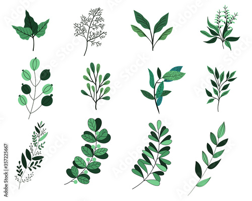 Fotomural Botanic watercolor leaf isolated white background