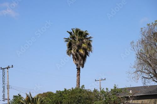 palm trees and blue sky Tapéta, Fotótapéta