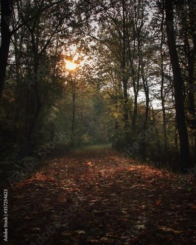 Obraz światło słońca na leśnej ścieżce - fototapety do salonu