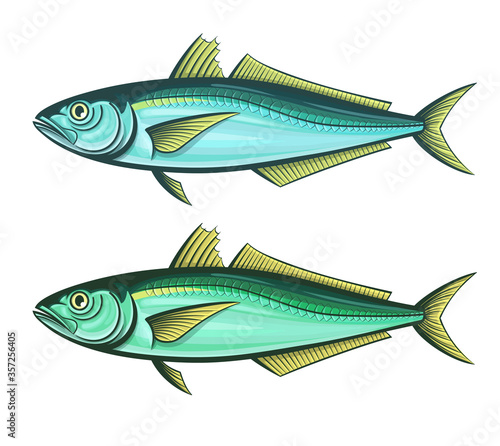 Vászonkép scad fish outline engraving vector illustration