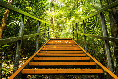 Fototapeta (Selective focus) Stunning view of a walkway along the tropical rainforest of the Taman Negara National Park