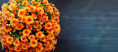 Large potted orange Chrysanthemums over a black background with room for text Wallpaper Mural