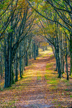 Hiking Trail Amidst Bare Trees In National Park During Autumn