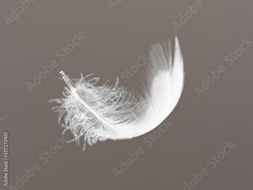 Fotografie, Obraz Feather floating on gray background