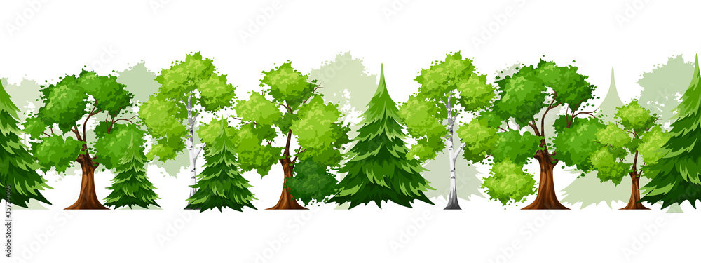 Fototapeta Vector horizontal seamless background with deciduous and coniferous green trees on white.
