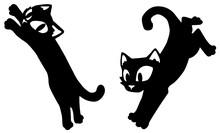 Cat Black, Pounce Jump Poses