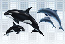 Dolphin And Killer Whale Realistic Transparent Icon Set