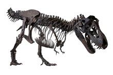 Wyrex (Tyrannosaurus Rex)  Din...
