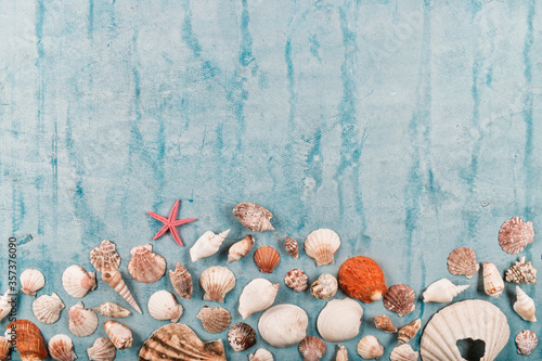 Obraz na płótnie Flat lay of mollusks or shellfish decorated on blue wooden surface