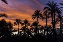 Silhouettes Of Palm Trees Unde...
