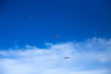 Four White Sea Gulls Flying In The Blue Sunny Sky Over The Coast Of Azov Sea