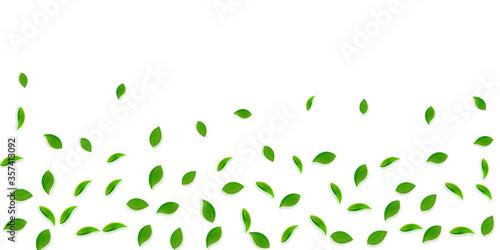 Falling green leaves. Fresh tea random leaves flyi Fototapete