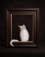 Studio Portrait Of White Kitte...