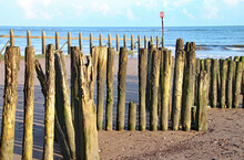 Old Wooden Logs Used As Groyne...
