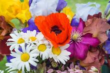 Beautiful Multicolored Floral ...