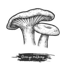 Orange Milk Cap Mushroom Vecto...