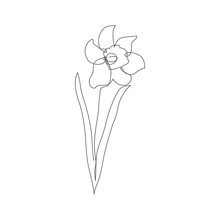 Continuous Line Decorative Hand Drawn Daffodil Flower, Design Element. Can Be Used For Cards, Invitations, Banners, Posters, Print Design