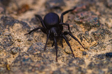 A Funnel Spider On The Forest Floor.  The Funnel-web Spider Belongs To The Araneomorphae Family. It Was Named After The Shape Of Its Network.