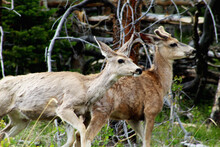 Wildlife Found In Colorado Mou...