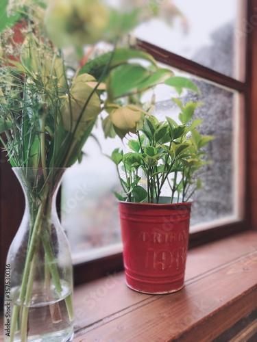 Fototapeta flowers in a pot obraz