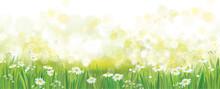 Vector  Summer Green Nature  B...