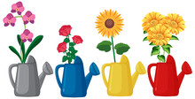 Set Of Flowers In Watering Can...