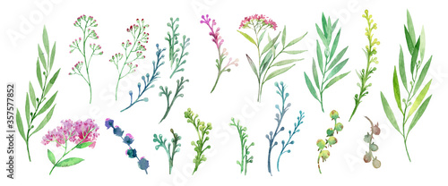 Obraz Flowers and plants. Set of plants. Visual elements on a white background. Plants drawn in watercolors. Set for creativity. Collection of flowers and herbs painted with watercolors. - fototapety do salonu