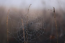 A Spider Web Covered With Dew ...