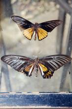 Butterfly At Habitat Butterfli...
