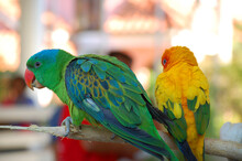 Parrots At Baluarte Zoo In Vig...