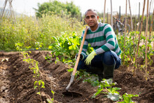 Worker Cultivates Garden Beds ...