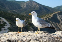 A Pair Of Seagulls On Stone