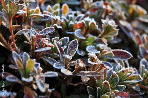 Photo 寒い冬の朝の公園にある草と霜
