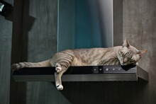 Cat Sleep On The Cooking Hood