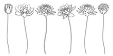 Set Of Outline Lotos Or Water Lily Flower, Bud And Seed Pod In Black Isolated On White Background.