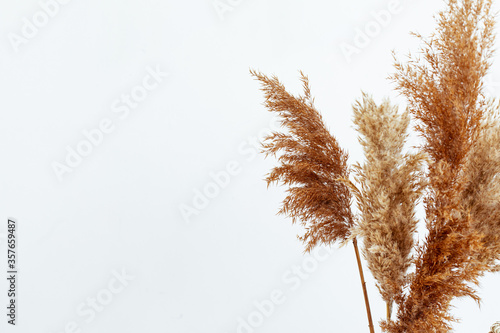 Obraz na plátne Stylish mockup with beige autumn dry flowers, fall