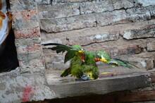Parrot On Gray Brick Backgroun...